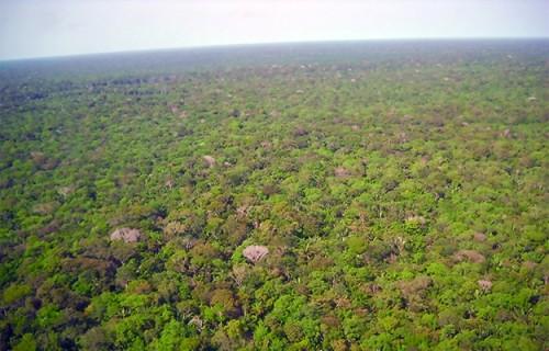 Um Sínodo para a  Amazônia: Por que sim?